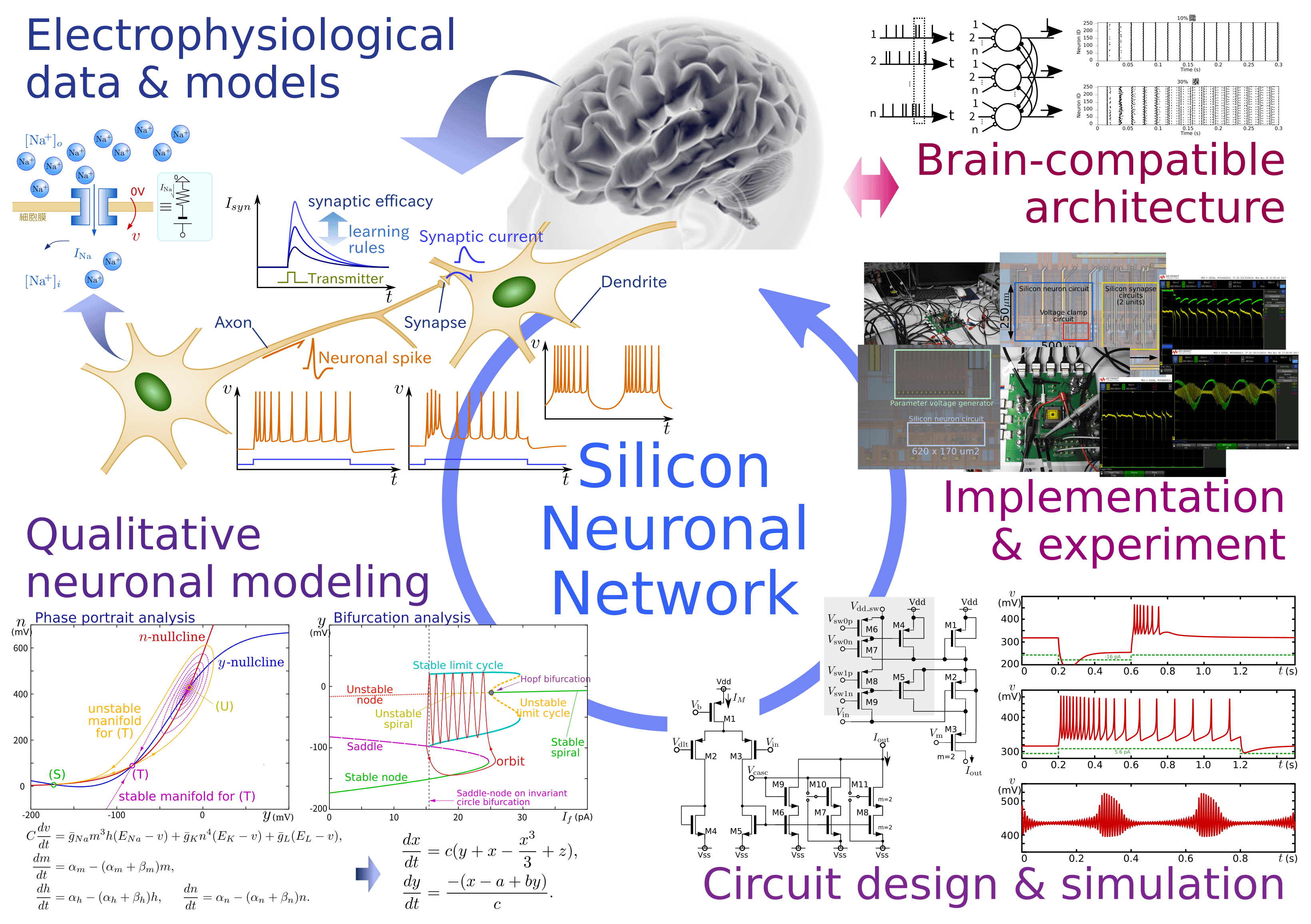 Silicon Neuronal Networks: a neuromimetic system